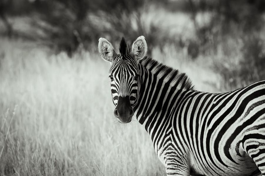 Mziki Safari bw-1
