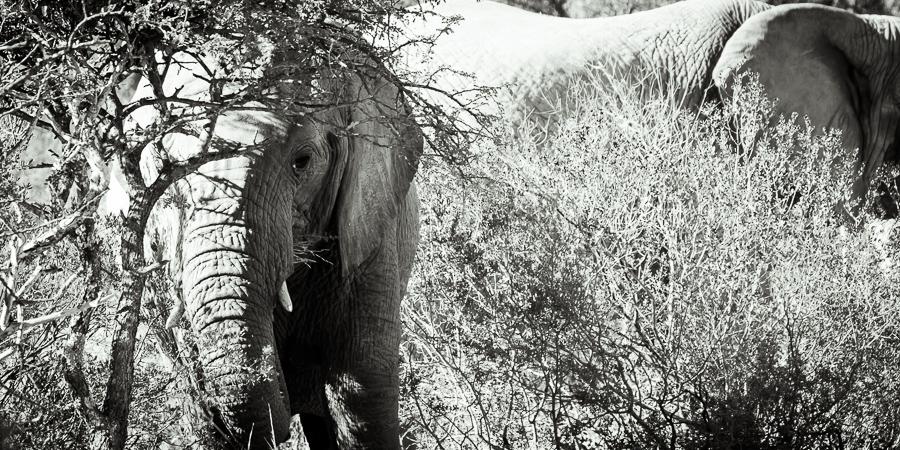 Mziki Safari bw-10