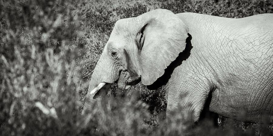 Mziki Safari bw-11