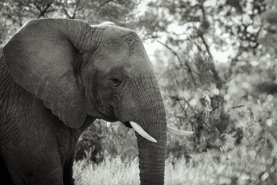 Mziki Safari bw-2