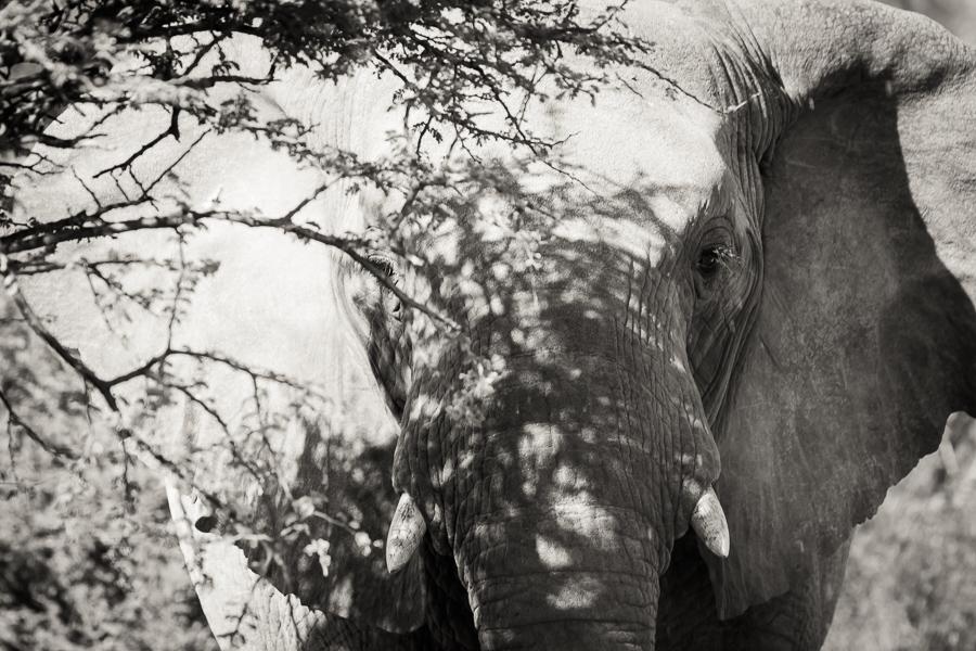 Mziki Safari bw-3