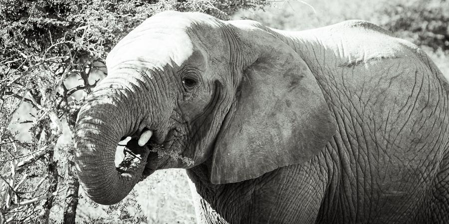 Mziki Safari bw-4