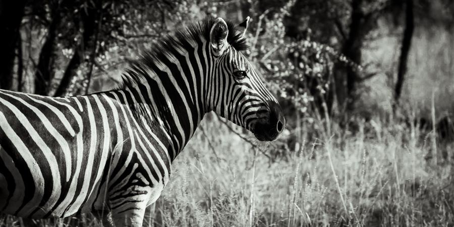 Mziki Safari bw-5