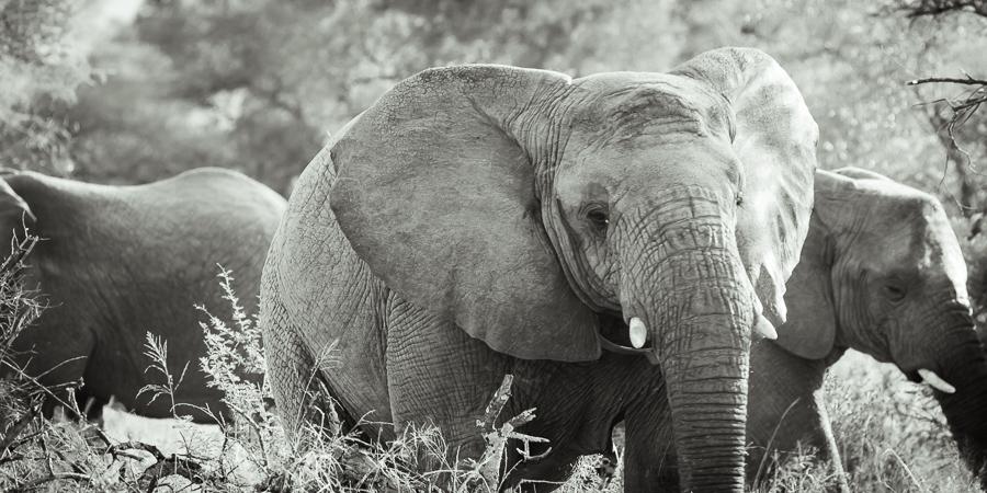 Mziki Safari bw-6
