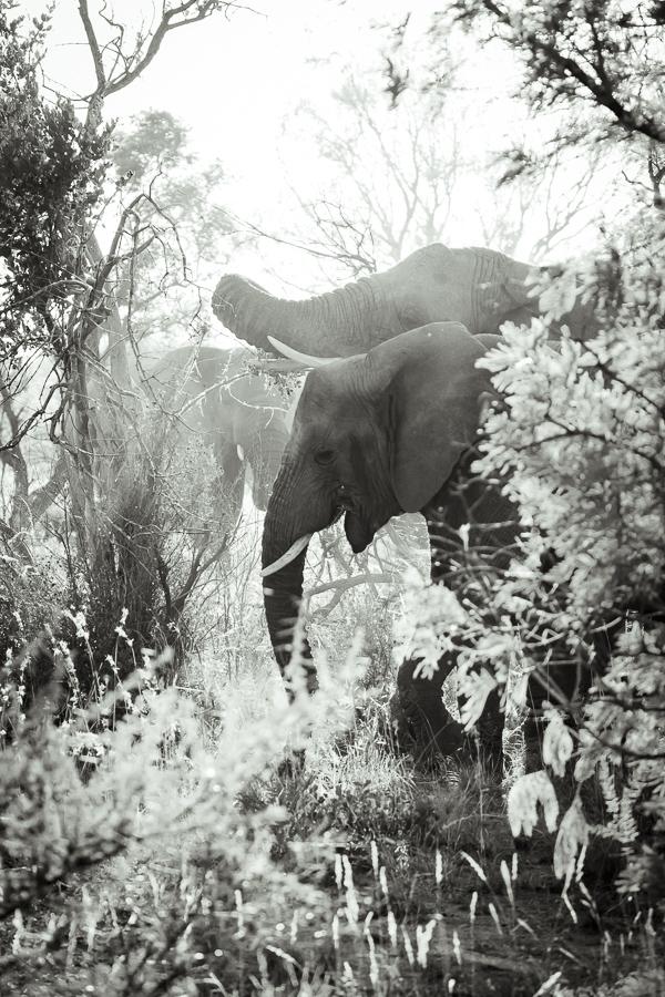 Mziki Safari bw-7