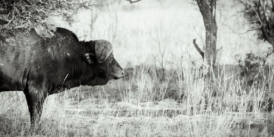 Mziki Safari bw-8