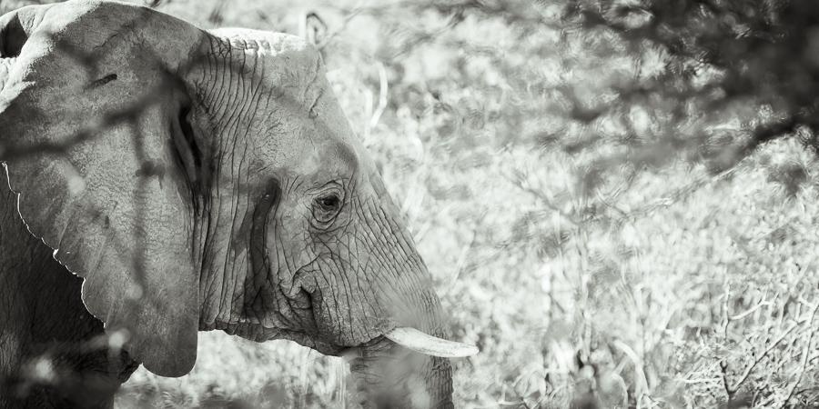 Mziki Safari bw-9
