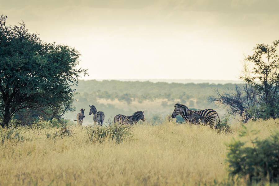 Mziki Safari-1