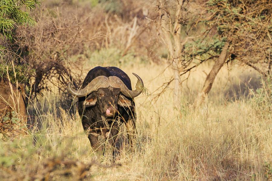 Mziki Safari-11