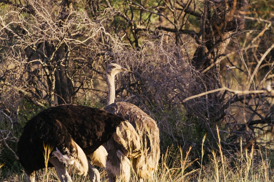 Mziki Safari-13
