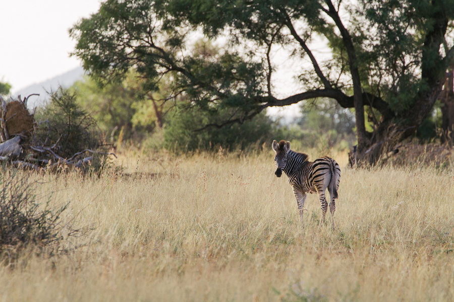 Mziki Safari-14