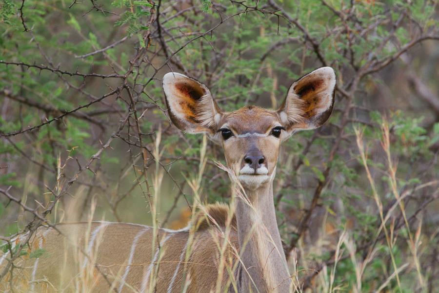 Mziki Safari-16