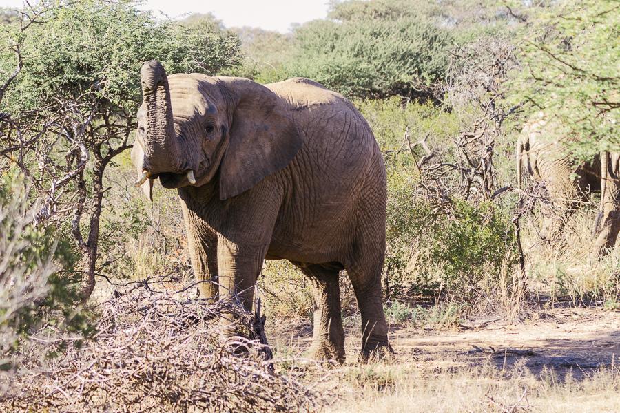 Mziki Safari-18
