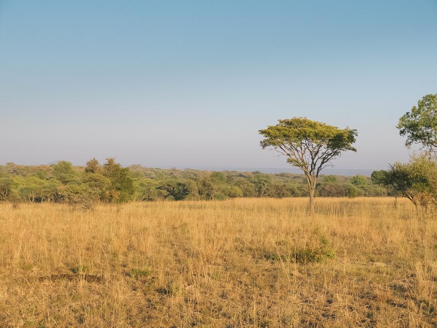 Mziki Safari-19