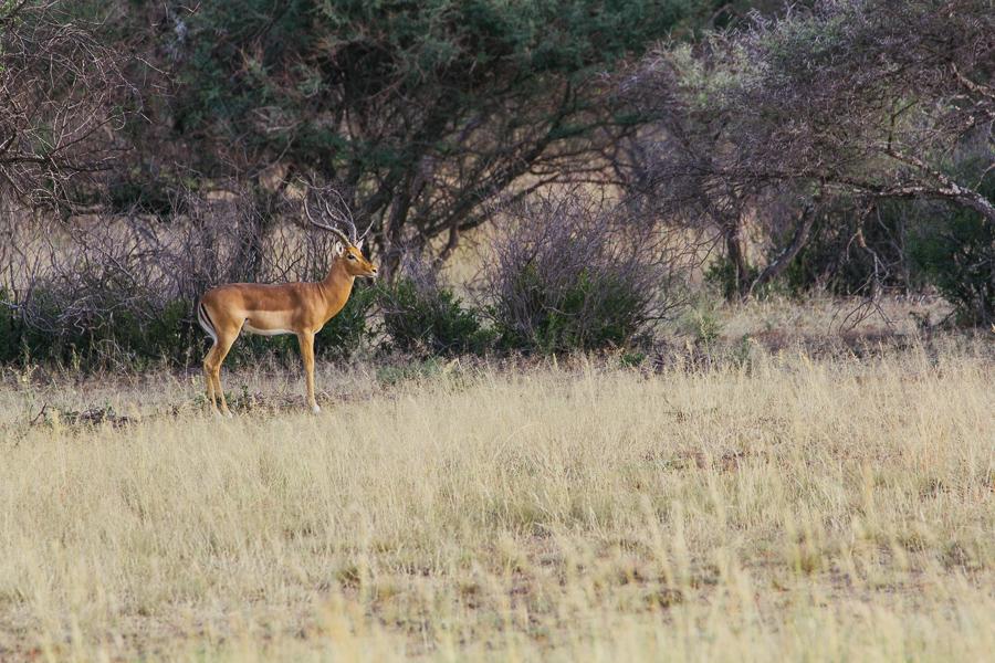 Mziki Safari-2