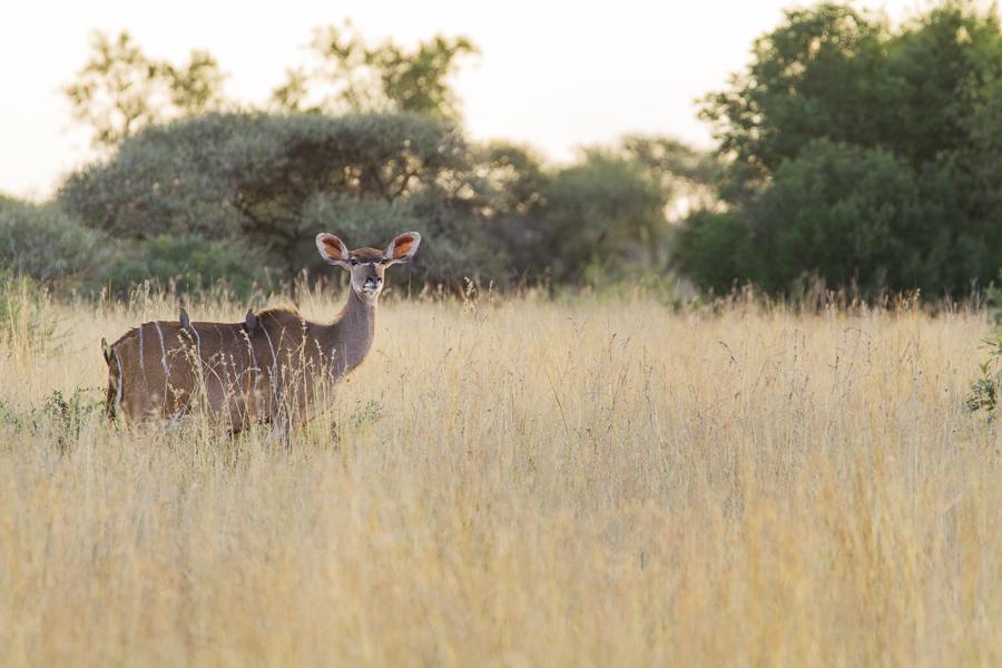 Mziki Safari-3