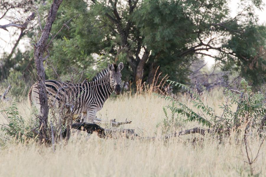 Mziki Safari-4