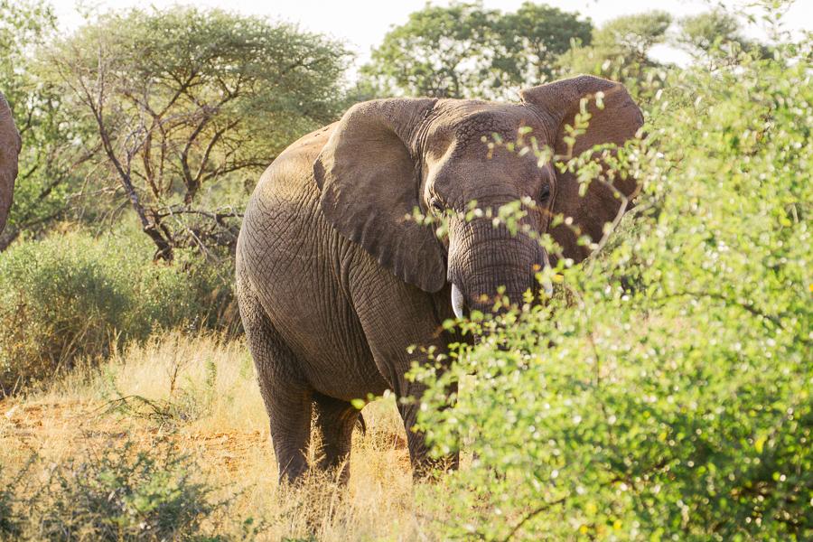 Mziki Safari-6