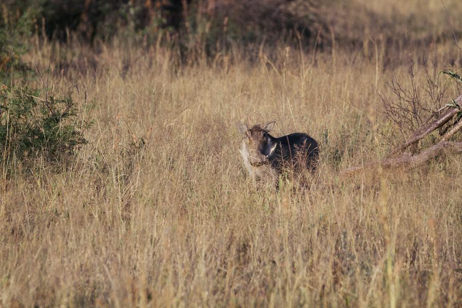 Mziki Safari-8
