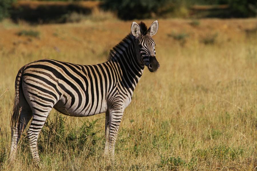 Mziki Safari-9