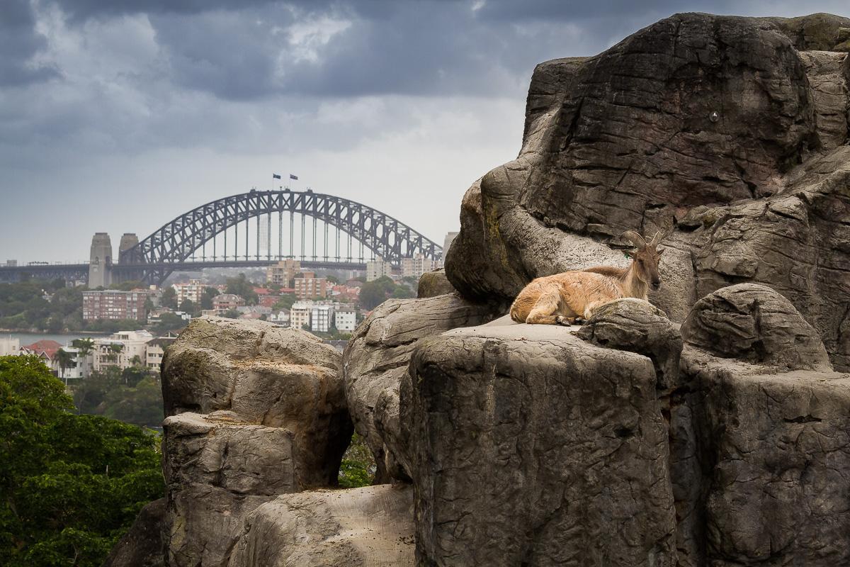 Sydney-11.jpg